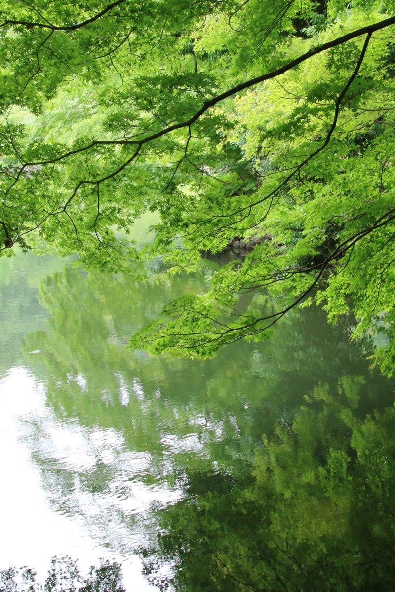 #自然景色 今日は蒸し暑い😱☀️、せめて写真で爽やか。 https://t.co/E0V9a3NeJf