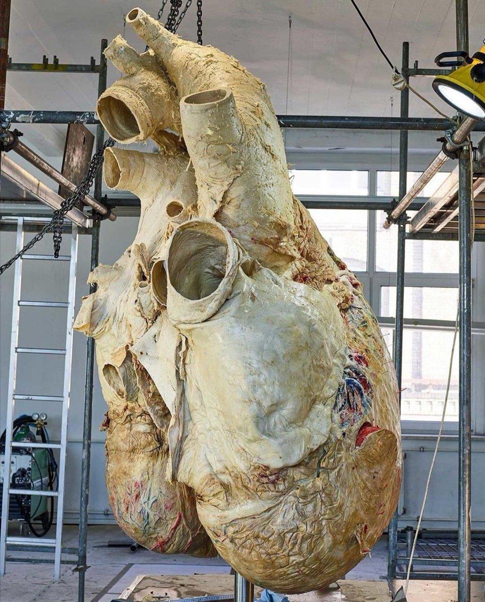 シロナガスクジラの心臓は人間の○○倍!