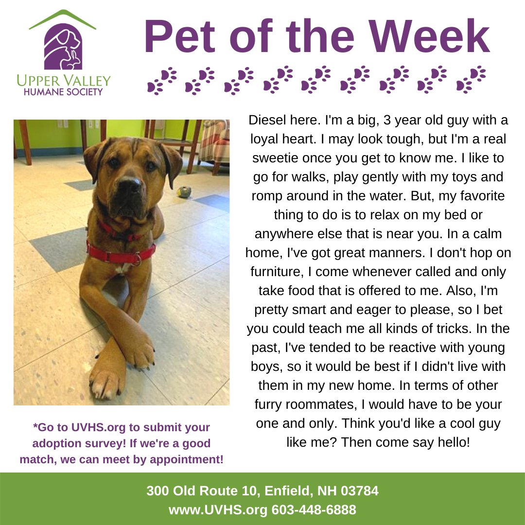 Diesel has been at UVHS since August 2019. That's quite a while to be waiting so patiently for a new family. We're calling on our followers to help us find him a home!  #adopt #adoptdontshop #uvhs #dog #petoftheweek #animalshelter #humanesociety #lookingforahome pic.twitter.com/uLLYea7kDH