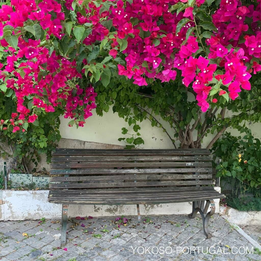 test ツイッターメディア - 散歩の休憩にぴったりな、ブーゲンビリアのベンチ。 #リスボン #ポルトガル #アルファマ https://t.co/kcVbqny6ti