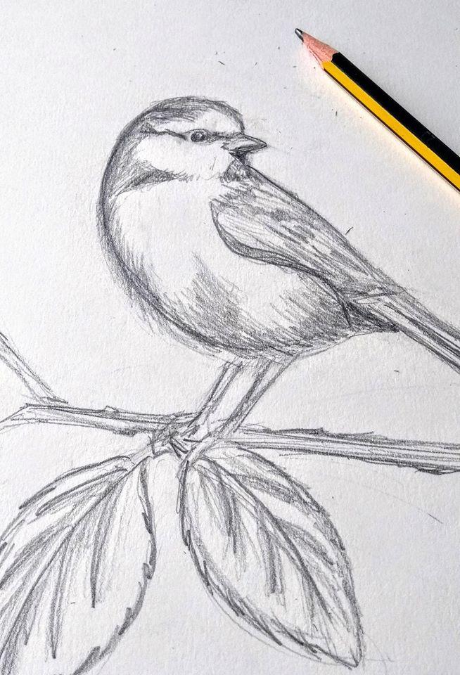 #screenprinting #wildlife #pencilart  #nature #bluetit #craftproject #inspiration  https://t.co/D4CPalYmEw https://t.co/w2yn3nb5yL
