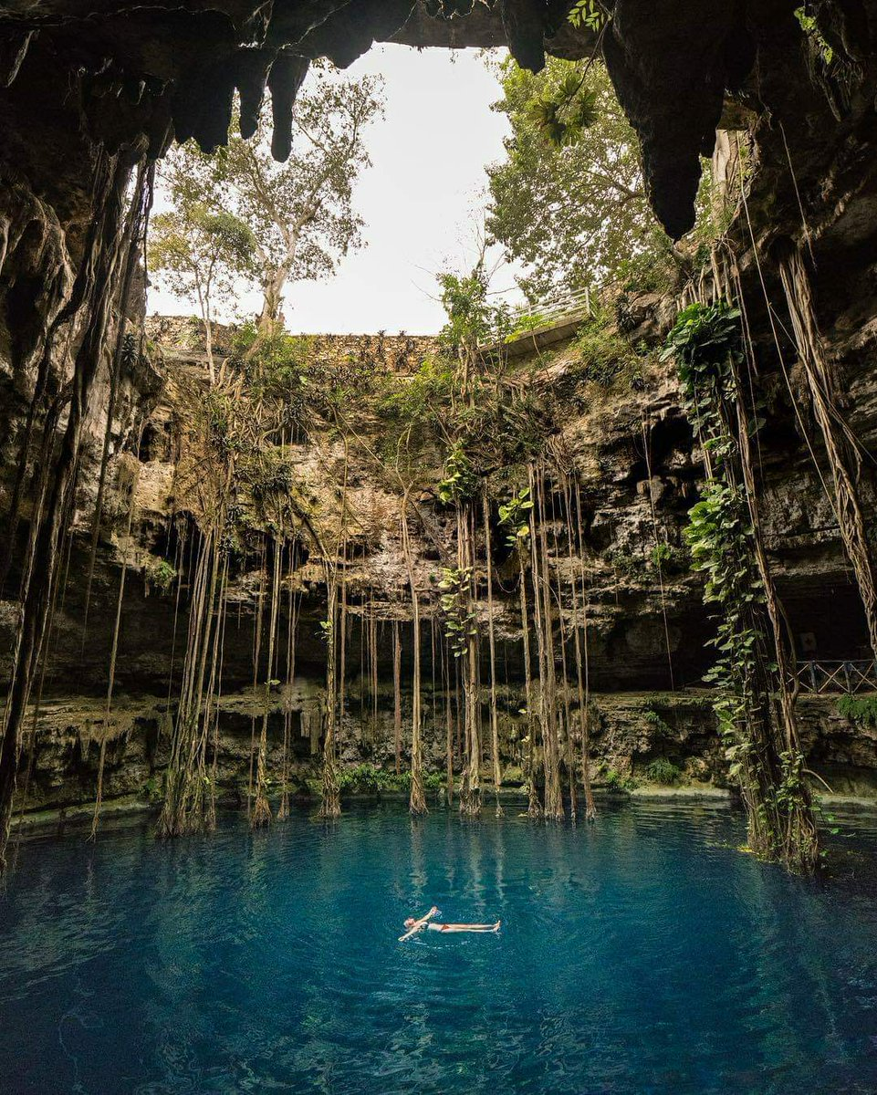 Look after our wondrous planet #changetheworld #sustainability @bugsandbears The Cenotes, natural sinkholes formed by collapsed cave ceilings, exposing water underneath, the only freshwater for plants & animals in the area. #plantbasednation #climatechange #animalagriculturepic.twitter.com/4LcprPiSQi