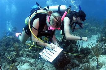 We're looking for #marine #biology #research projects to help young future #researchers. Get involved as a project supervisor & inspire the next generation of researchers by supporting @NuffieldFound remote working students? Sign up https://t.co/PaX7QvBbmP #STEMed #nuffieldsummer https://t.co/EapbKjaQwT