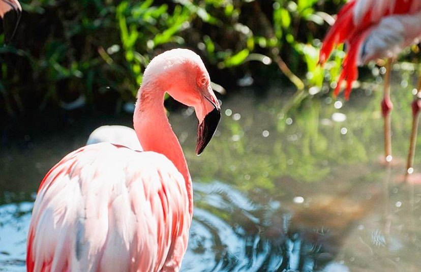 WILD NEWS: @BrevardZoo is among the top 30 zoos in the US! bit.ly/2TL2epU #LoveFL 📷 IG: flspacecoast