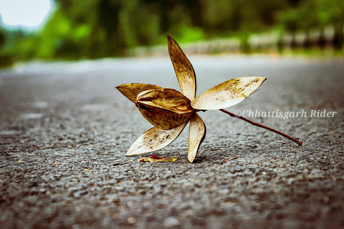 Seamless like a fall #leaf changing #color, my will switched #powerfully.  #leaf #tree #Cgrider  #chhattisgarhrider #raigarhcity #chhattisgarh #india #gochhattisgarh #incredibleindia #leafyishere #leafphotography #leaftattoo #leafartpic.twitter.com/lJ6TP76Xq1