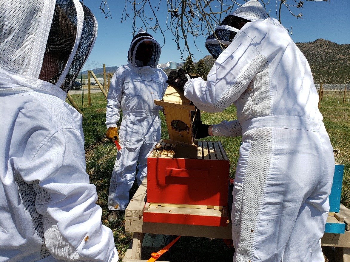 The Arkansas Valley Correctional Facility and Buena Vista Correctional Facility have developed & implemented beekeeping programs & the beehives are thriving! Inmates  have learned how to care for the hives, do daily checks, feed the bees, and clean the hives. #Honey https://t.co/x6th8hiUeY