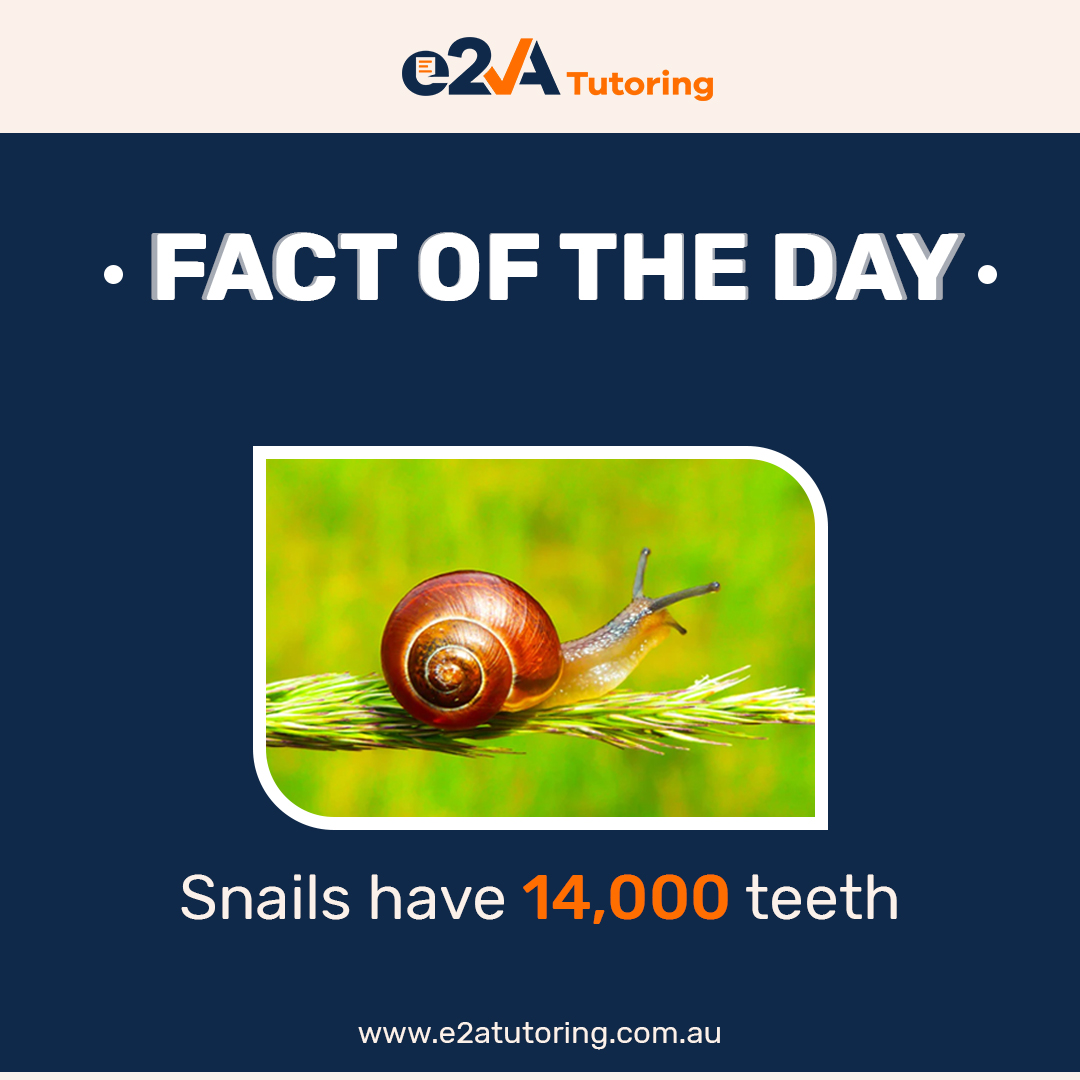 Did you know that? Snails have 14k teeth and some can even kill you!   Start learning with us: http://www.e2atutoring.com.au . . . #studentlife #e2atutoring #tutoringcompany #onlinestudy #studyonline #testpeparation #learnwithus #studygram #onlinepreparation #facts #snails #didyouknowpic.twitter.com/vC2Whd7ZCr