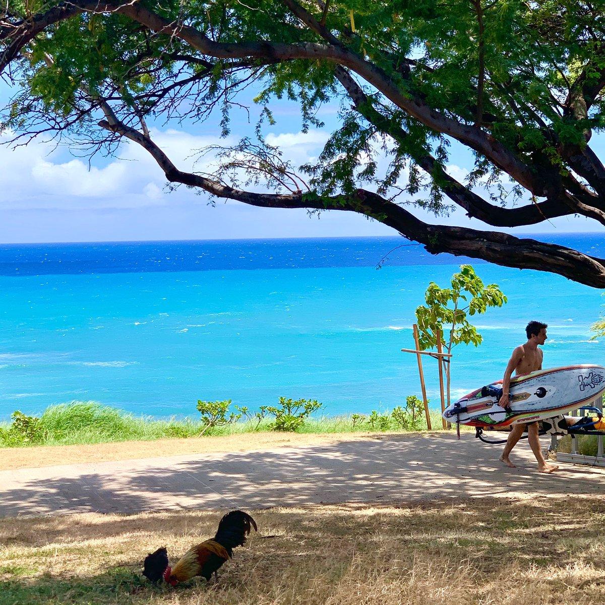 My view🐓🏄♂️💙  ニワトリと海?笑!  #surf #surfergirl #diamondheadbeach #hawaiilife #hawaii #hilife #lovehawaii #surfing #surflife #beachlife #beachday #islandlife #aloha #luckywelivehawaii #サーフィン #サーフィン女子 #ハワイ #ビーチライフ #ハワイライフ #ハワイ暮らし #海のある生活 https://t.co/RXWU3FNBdc