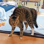 猫のオラつきって…人間にとってはめっちゃ可愛いよね