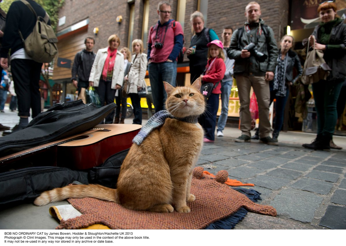 Hodder & Stoughton and James Bowen are saddened to announce the death of Bob the cat on 15th June at the age of at least 14 years.  https://t.co/jsTVqBPUq1 https://t.co/cdCGInbAyW