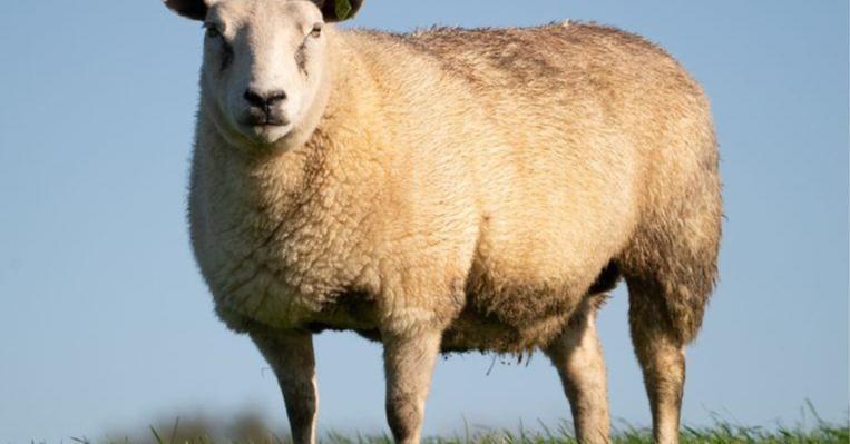 Er staat ons een extreem droge zomer te wachten. Humo sprak met droogoloog Tim Verpaemel: 'Waar het écht nat is, komen geen schapen voor, de Noordzee is daar een goed voorbeeld van' https://t.co/s1t8NHaQ0c https://t.co/FffJngr1JB
