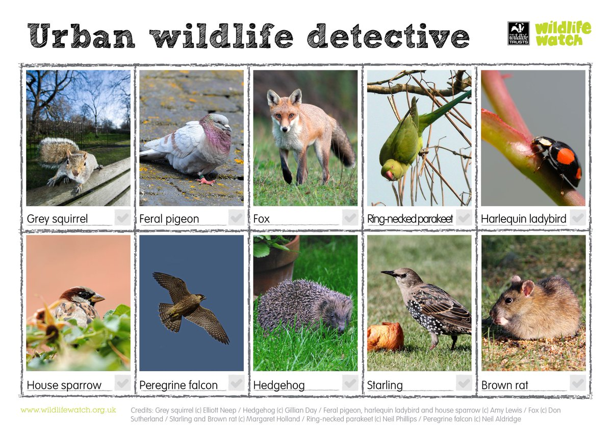 Become a wildlife detective for day 17 of #30DaysWild and see what you can spot near you. #urbanwildlife #wildlife https://t.co/z369WhpFZ1