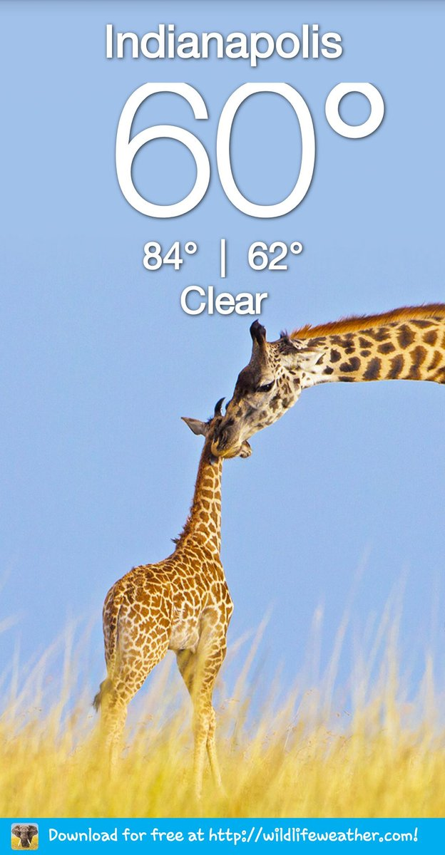 Check out the Wildlife Weather app at https://t.co/bu5f6D4dO2 https://t.co/EX2fc7juqX