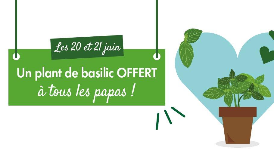 Pour la #FeteDesPeres , nous offrons à tous les papas, sur simple visite en magasin, un plan de basilic ! L'offre est valable uniquement ce week-end (20 et 21 juin). Dépêchez-vous, il n'y en aura pas pour tout le monde !😉 https://t.co/pYC7fnqmAY