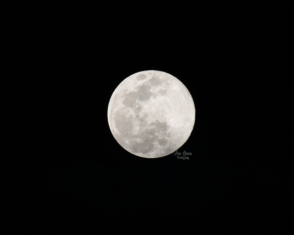 """""""I love to think that animals and humans and plants and fishes and trees and stars and the moon are all connected."""" - Gloria Vanderbilt  #AnaGarciaPhoto #superpinkmoon #pinksupermoon #supermoon #supermoon2020 #fullmoon #moon #superfullmoon #nikonnofilter #Florida #sky #nightskypic.twitter.com/PLLjx7E1ek"""