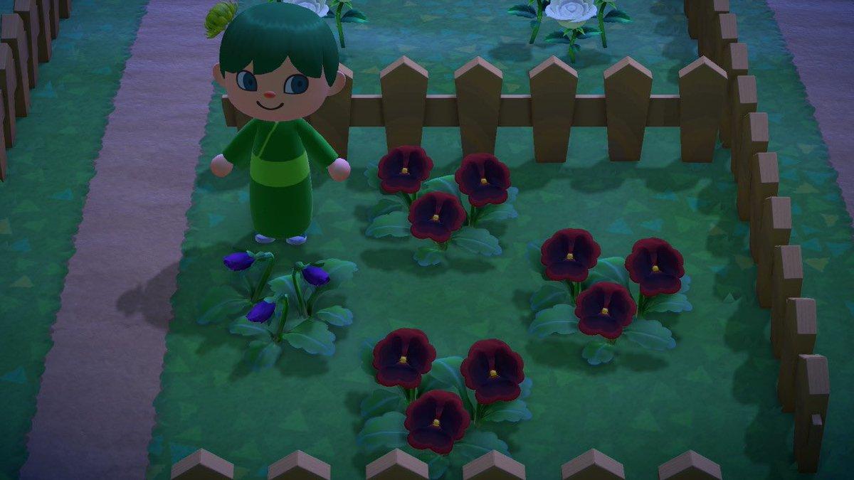 紫 パンジー 森 あつ の