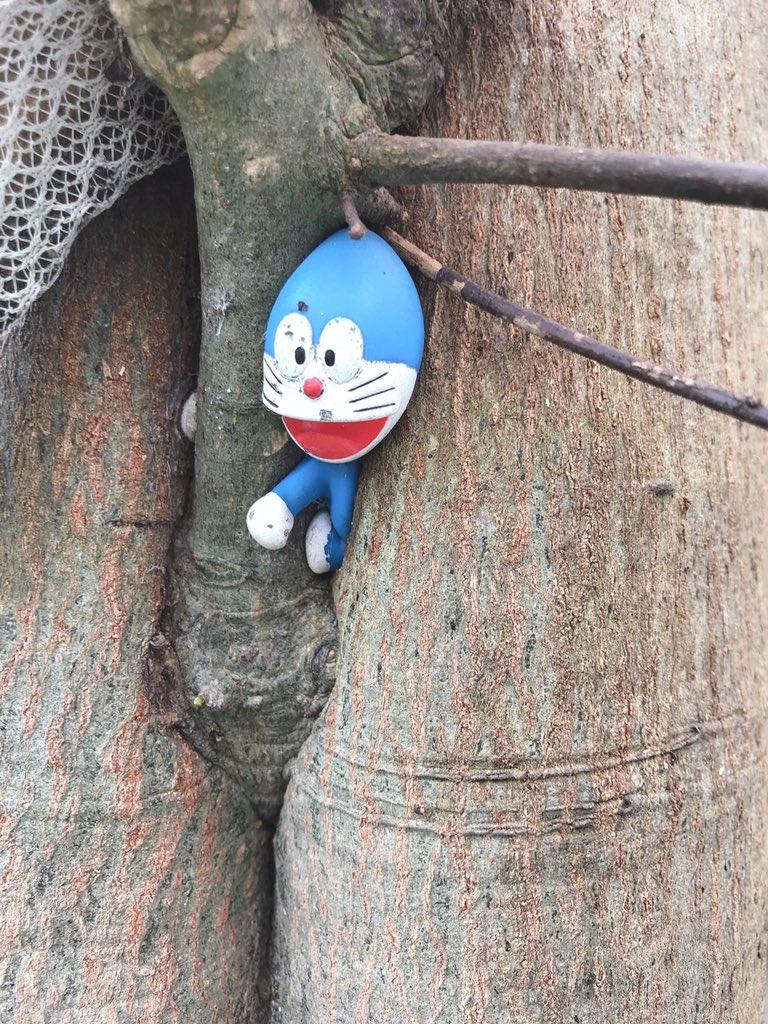 家の木の枝にドラえもんのフィギュアをぶら下げたまま放置した結果・・・www成長した木の一部にwww