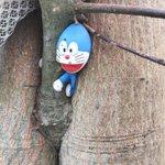 家の木の枝にドラえもんのフィギュアをぶら下げたまま放置した結果・・・!成長した木の一部に!