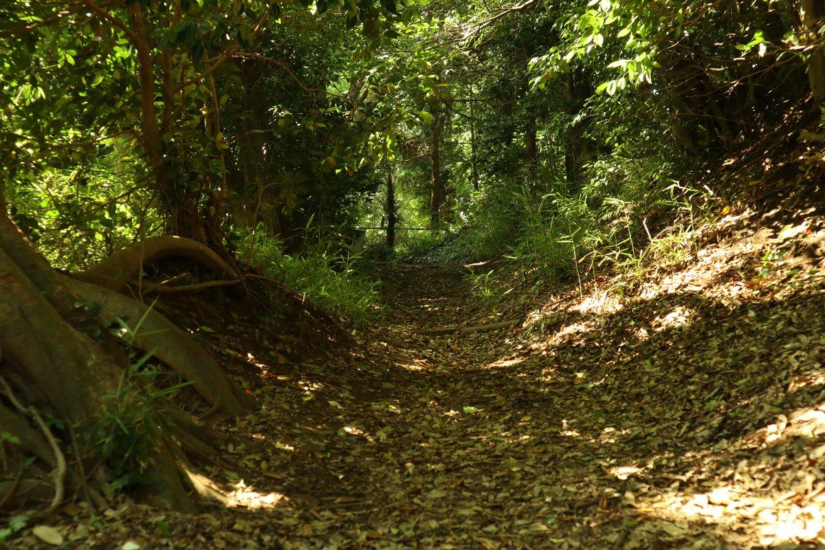 #カメラ始めました #森の写真  暖かな森の木道を撮影してみました~ https://t.co/w310NbJDFR
