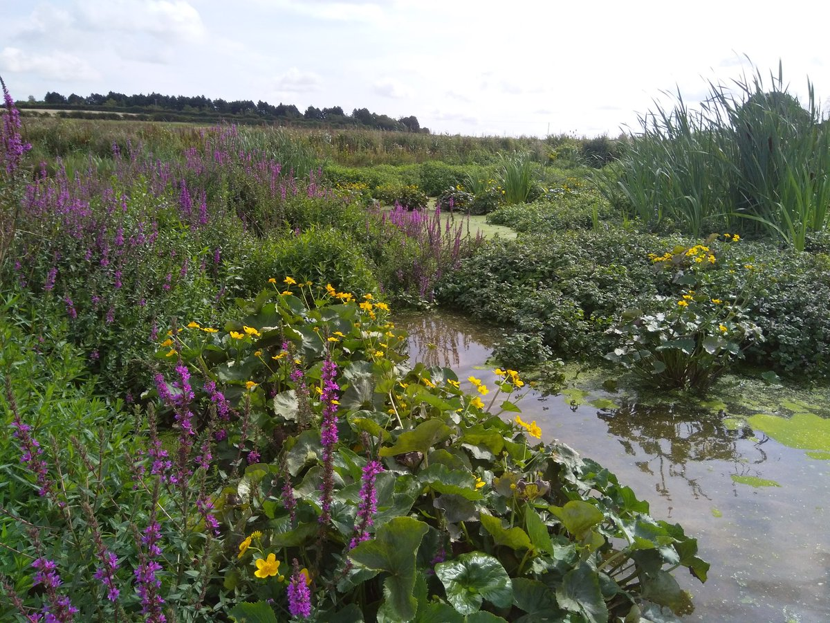 Our wonderful Ingol wetland creation has been used as a shining example of a successful project in WWFs blueprint for Bankable Nature Solutions. Want to know what these are? Read the report & see the other case studies selected from across the globe: bit.ly/2zHqXEw