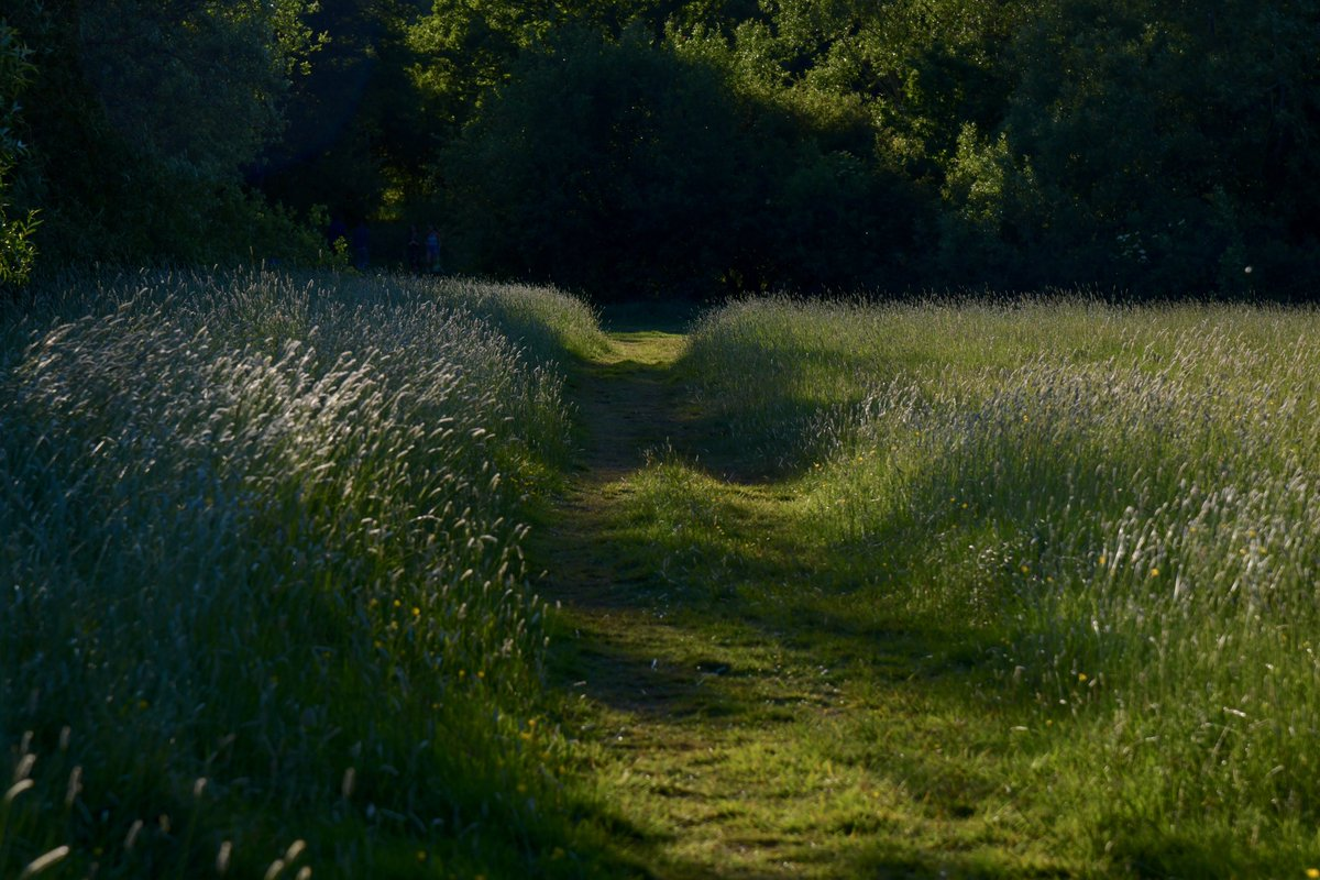 We'd be very grateful if you could take a moment to complete a really brief online survey for us https://t.co/oJSc57PTMu before Fri 3 July.  It's interesting for us to look at how people have been benefiting from #EppingForest throughout the COVID-19 pandemic. Thank you so much. https://t.co/CFMZANAr80