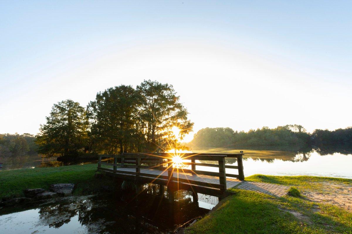 Sunny Florida mornings ☀️