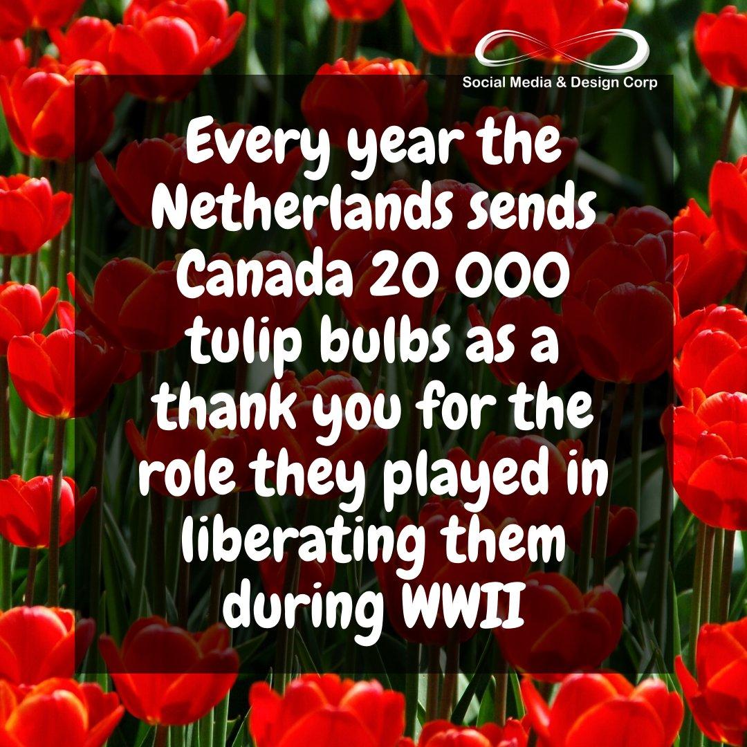 A random fact to kick off your Friday #FactFriday #randomfact #tulips pic.twitter.com/DzkdwcTzjX