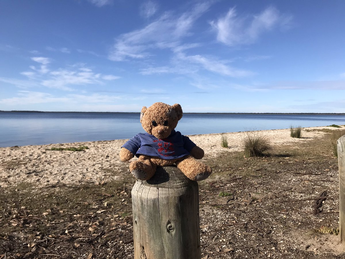 @communitypresch Travelling Ted is enjoying a few days away from Melbourne for the winter school holidays. He has been spotting koalas on #RaymondIsland  #paynesville #koalas #travellingteddownunder https://t.co/ror0f2jWku