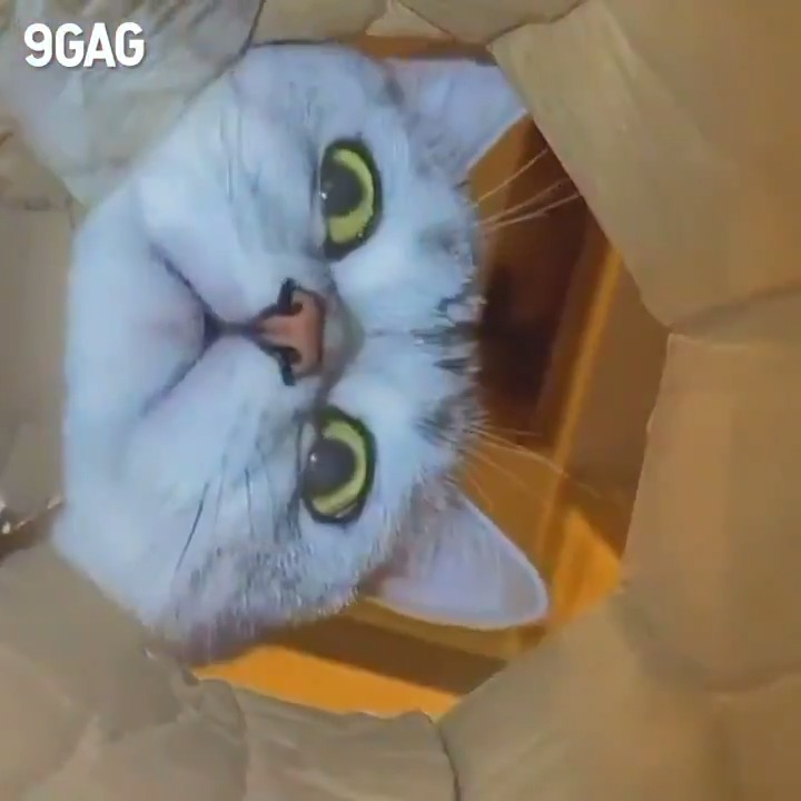 [🔊] What my last Pringle sees  @MeowedOfficial https://t.co/tQ6UckIbL7