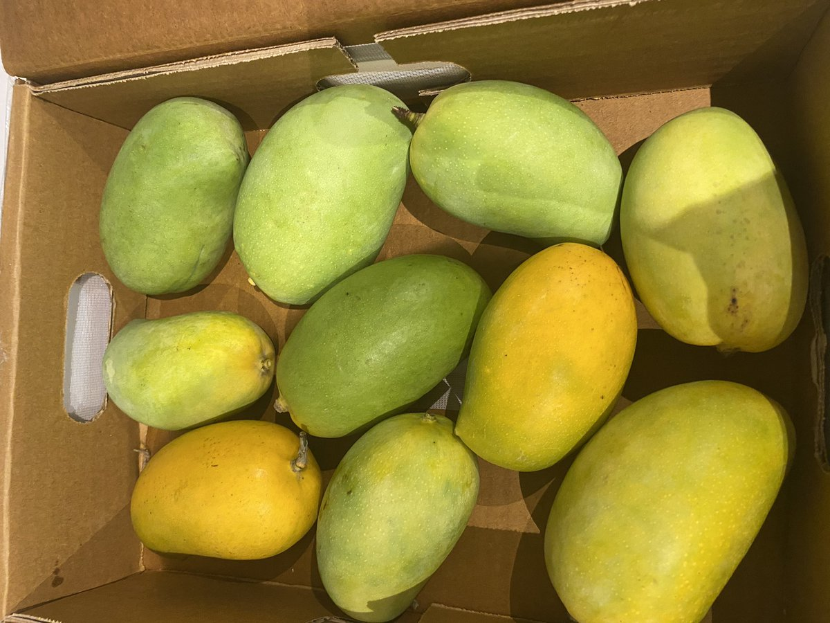 For this who missed the initial consignment of Indian mangoes-pleased to announce that KESAR Mangoes have finally arrived in NZ & r avail at all major Indian Grocery shops Don't let go of this rare opp to enjoy this sweet & delicious variety @IndiainNZ @APEDADOC @MukteshPardeshi