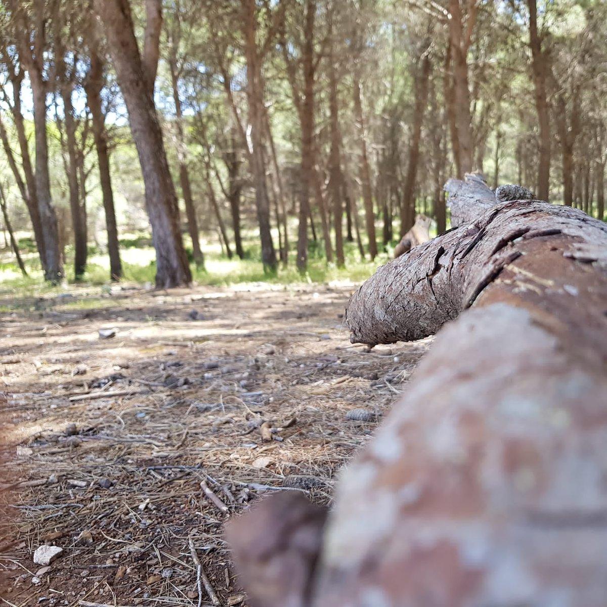 Naturaleza #malaga #nature #naturaleza #lifestyle #konmegan #montaña #mountain #trees #arboles #tronco #bosque #jarapalos #alhaurindelatorre #senderismo #senderos #Senderista #lovemountains pic.twitter.com/g1V2dsFOUn