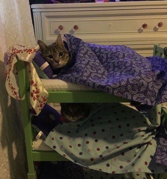 kitty,, sleepover