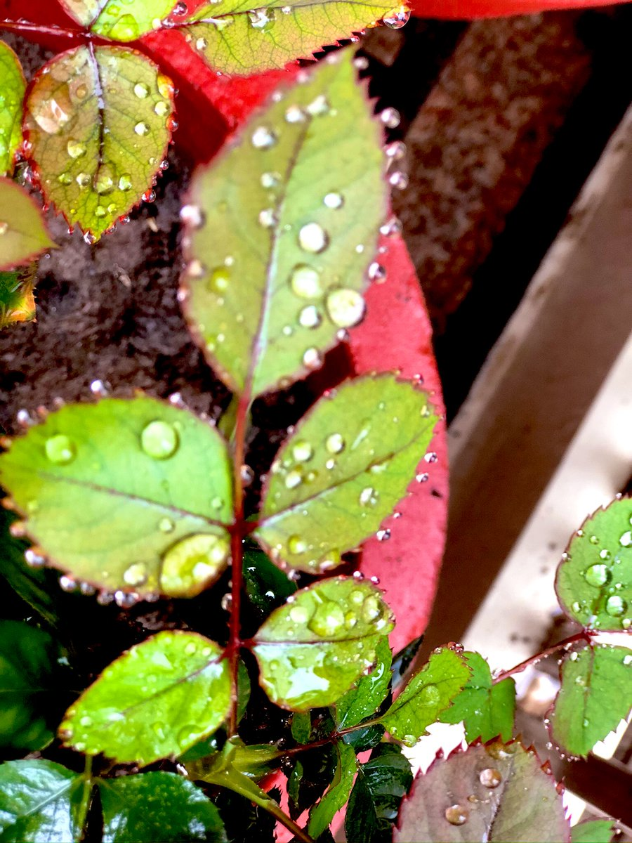 nature's way of adding sparkle to the outdoors....... #rain #beautifulnature pic.twitter.com/IYPx9IWeds  by 🌿gayatri