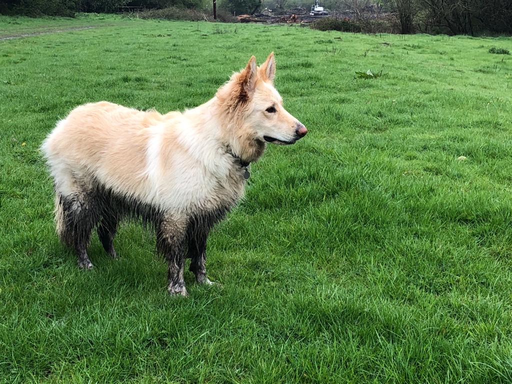 @canine_partners Want to play with me Jonah? I'll let you share my muddy puddle.