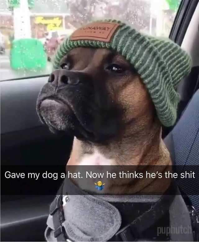 #animalmemes pic.twitter.com/oUTIVaEetw