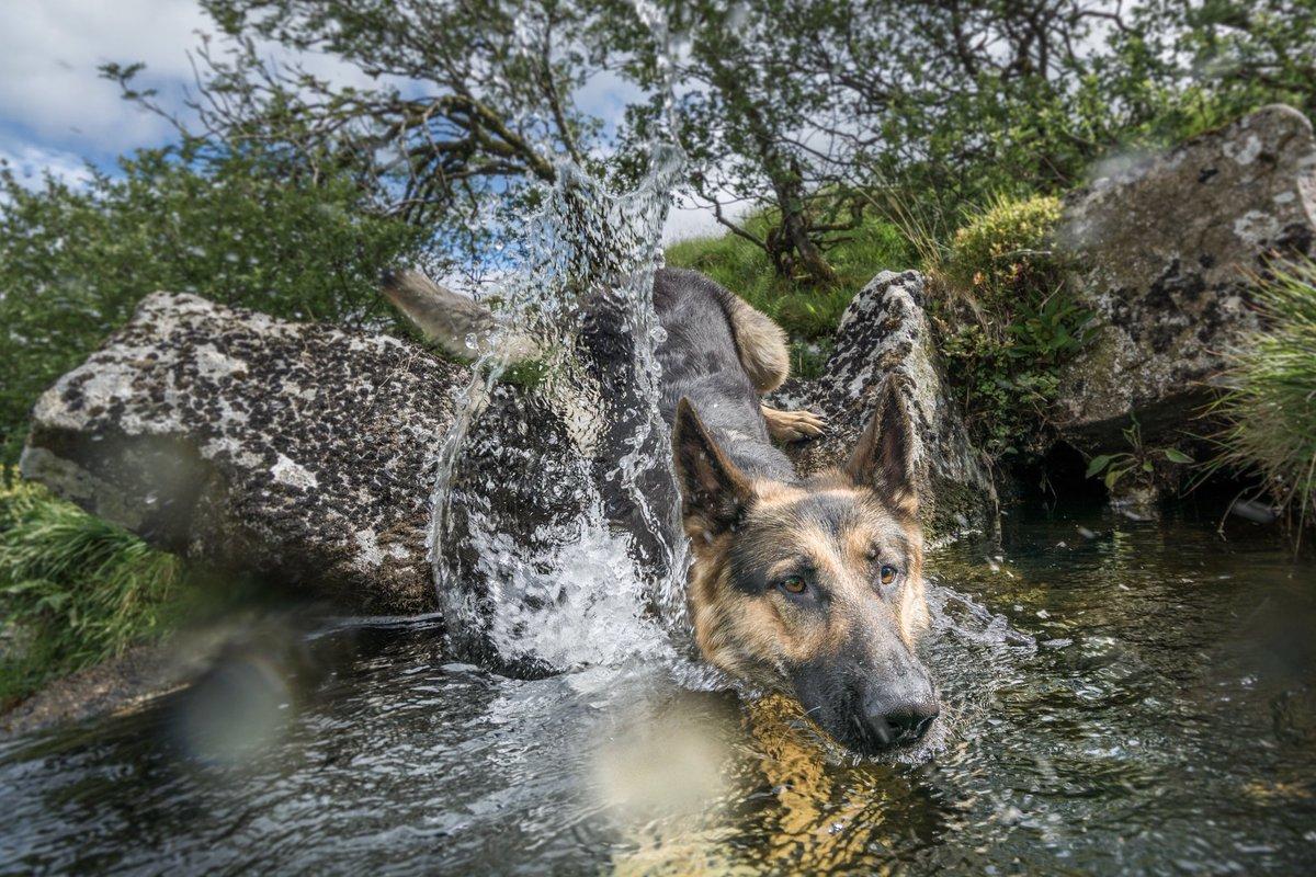 bAtH tImE    #WashTimeWednesday   Lookin fer me loofah   #Dartmoor #WallaBrook #GSD #DogsofTwittter #WednesdayMotivation <br>http://pic.twitter.com/GCrZlkdnzt