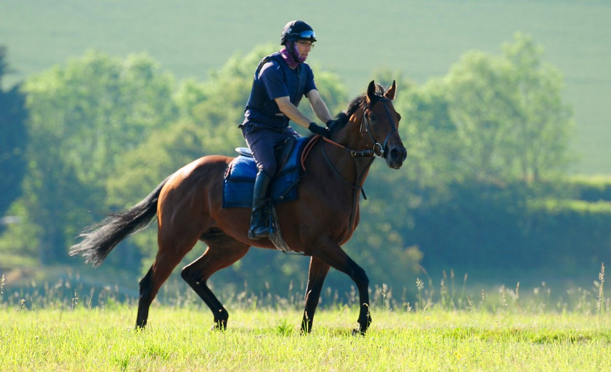 Jazz Party (New Approach ex Harlem Dancer) runs in the Unibet 3 Uniboosts A Day Novice Stakes (Div II) (6.45 pm) over 1 mile 4 furlongs at Kempton this evening. She is well and is ridden by jockey David Probert.