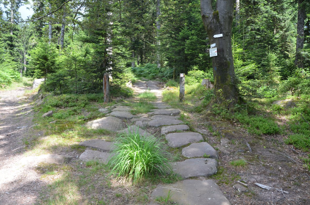 A well preserved ancient stretch of Roman road in the Vosges forest near Raon-les-Leau in northeastern France. https://t.co/SHWCXs1UEE