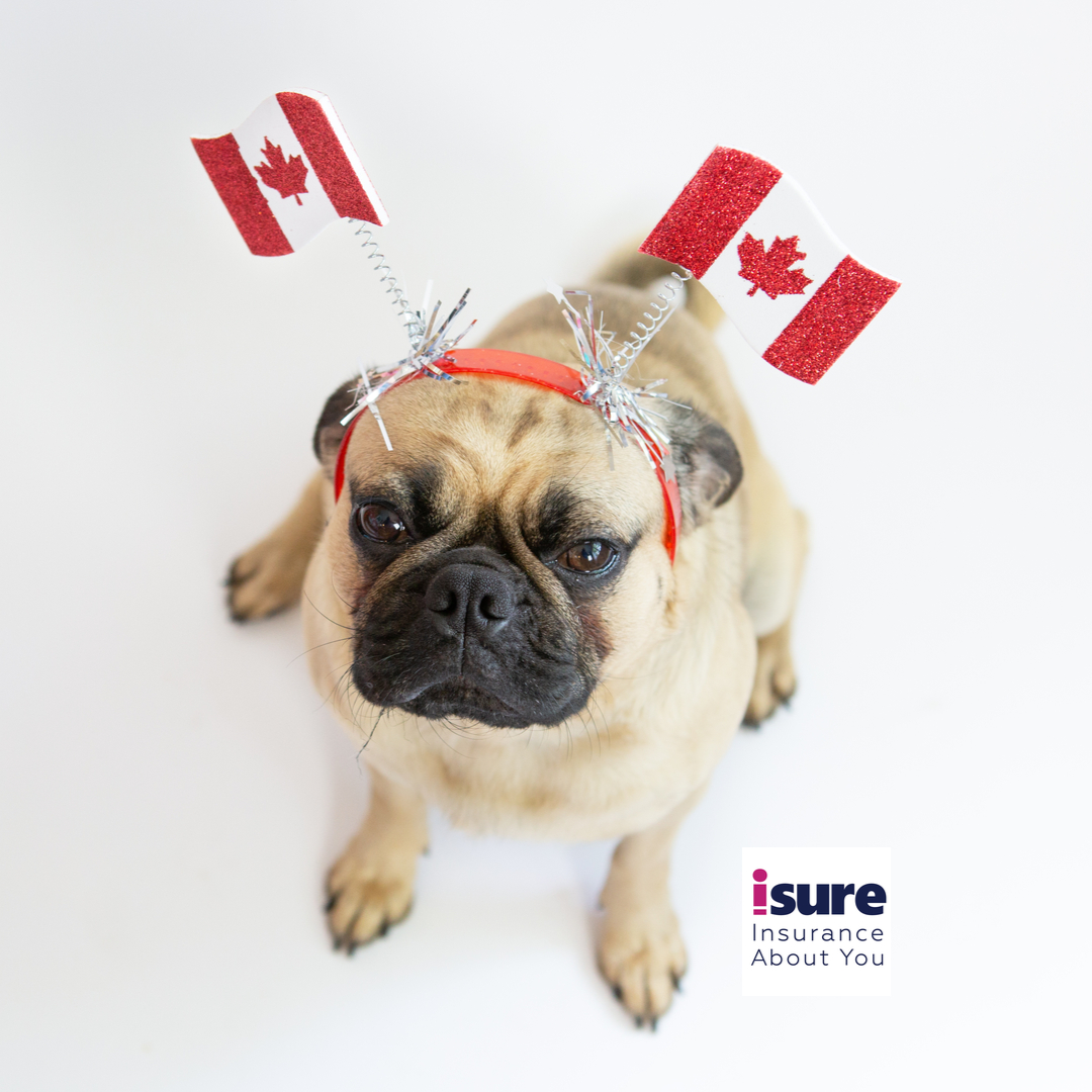 Happy Canada Day!  #isure #InsuranceAboutYou #canadaday #happycanadaday #canada #pugs #pugsofinstagram #puglove #dogsofinstagram #instadog pic.twitter.com/DLRjL99JVE