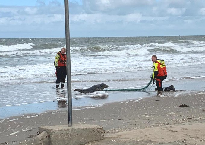 Zeehond ernstig gewond door visnet https://t.co/8JRZKdczA8 https://t.co/1qbPYZlOTW