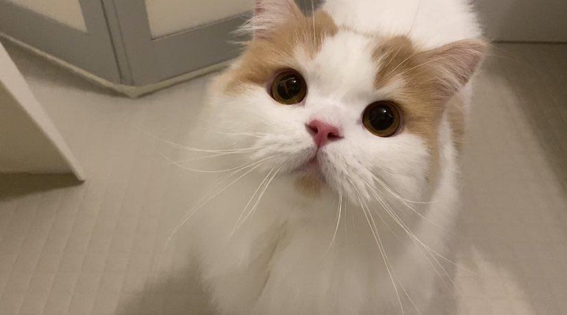猫 レモン ちゃん