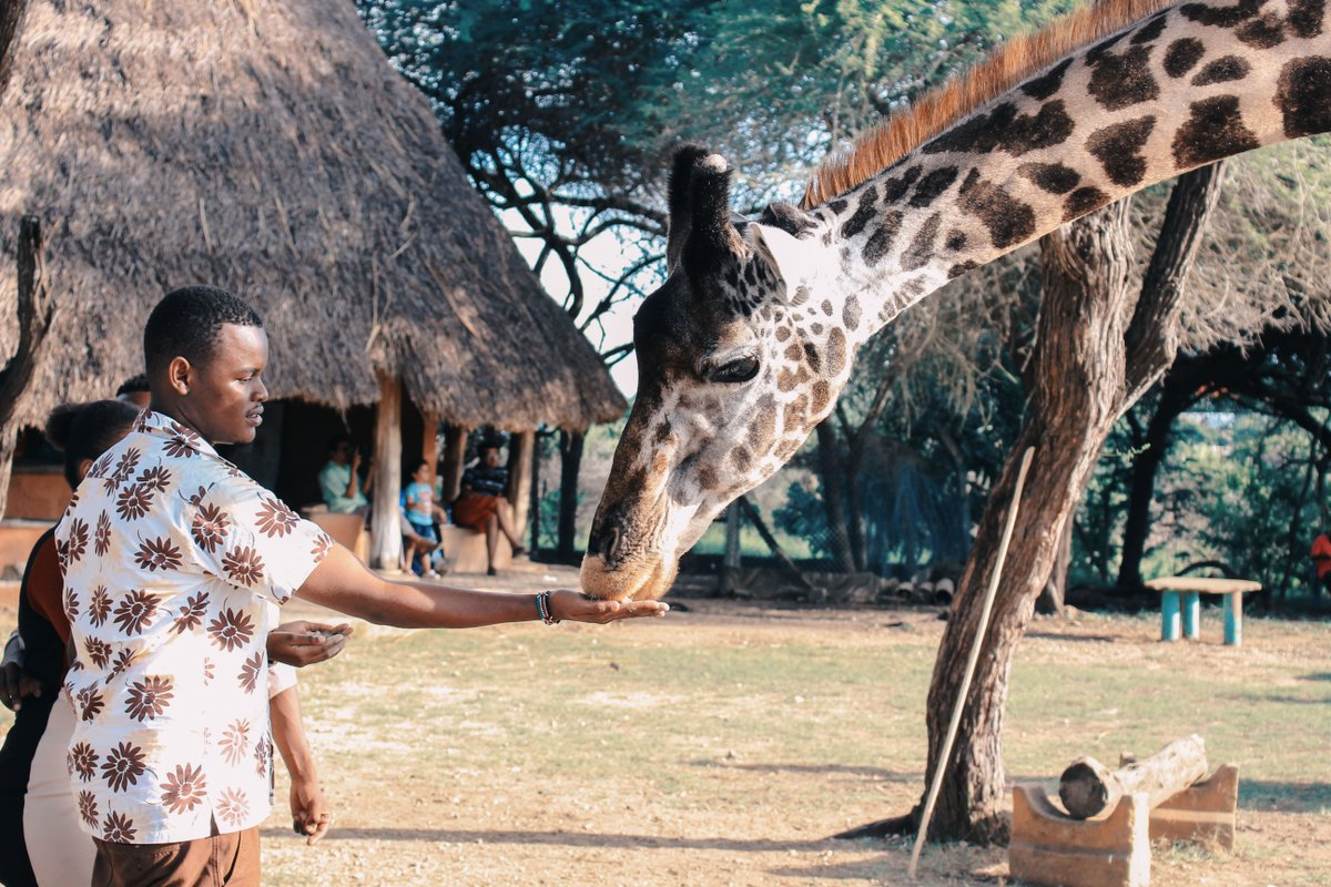 Incredible experiences of a lifetime, waiting for you in Africa.  #Africa #Travel # experiences #travelrepublicafrica #explore #giraffes #tour #travelgram #igtraveller #travelholic #travellers #travelpic #mytravelgram #traveladdict #naturepic.twitter.com/jZDRyq21QE