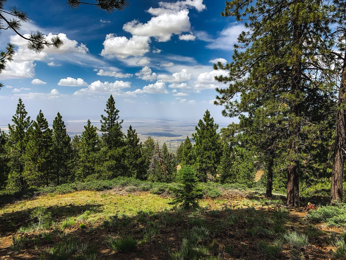 Go GREEN this 4th of July weekend at the Sky High Disc Golf Course, now open every Thur-Sun. Learn more at https://t.co/XybR46R1tI #mthigh #discgolf #the_sky_high_dgc #4thintheforest https://t.co/WIDrM4jbHy