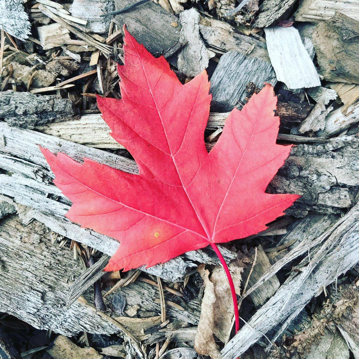 Happy Canada Day! 🇨🇦❤️ #UAlberta https://t.co/yQBnj3UP5o
