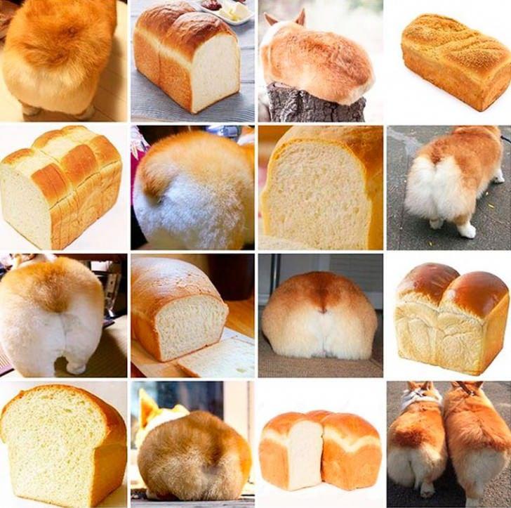 Corgi butt or croissant? #outofsightdesigns #funnymemes #animalmemes pic.twitter.com/hI4tZwqsSX