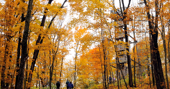 Trail heads to Wisconsin's highest point  #hiking #optoutside #travelwisconsin  https://tinyurl.com/yb6zttgj pic.twitter.com/XDXBriMUu7  by Day Hiking Trails
