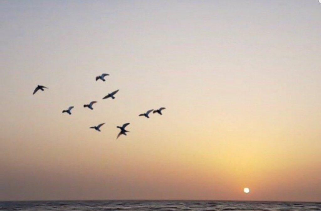 ☀ إشراقة صباحية   ☀️      صباح آلرضا بمآ قسّم آلله  وحسن آلظن بمآ تخبئ الآيام لنآ ♡.         #صباح_الخميس https://t.co/AvUSHtDrOd