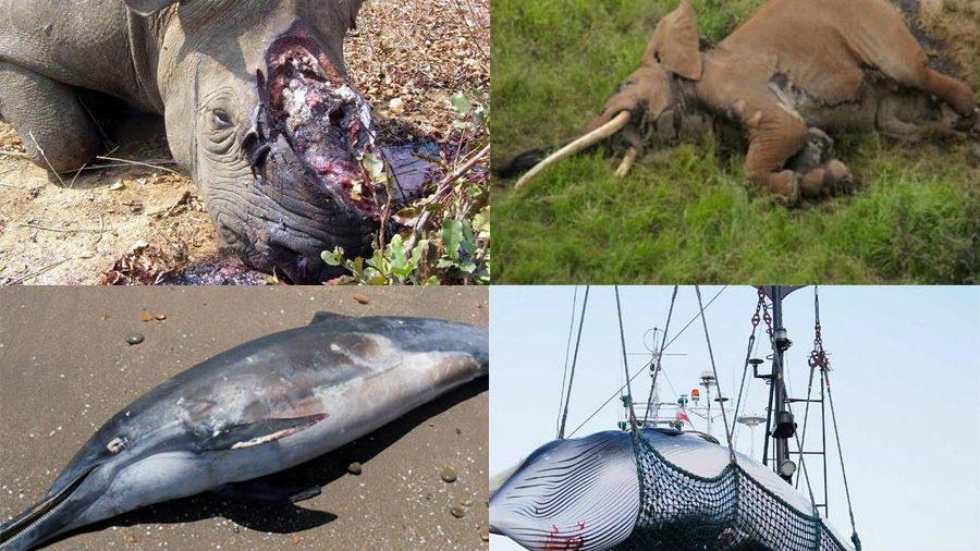 Quelle espèce animale souhaitez-vous voir disparaître en 2019 ?  #Animaux #Baleine #Canicule #Climat #Dauphin #éléphant #MarchePourLeClimat #Rhinocéros  https://t.co/ipamOPnEyN https://t.co/t4oFI9BEfz