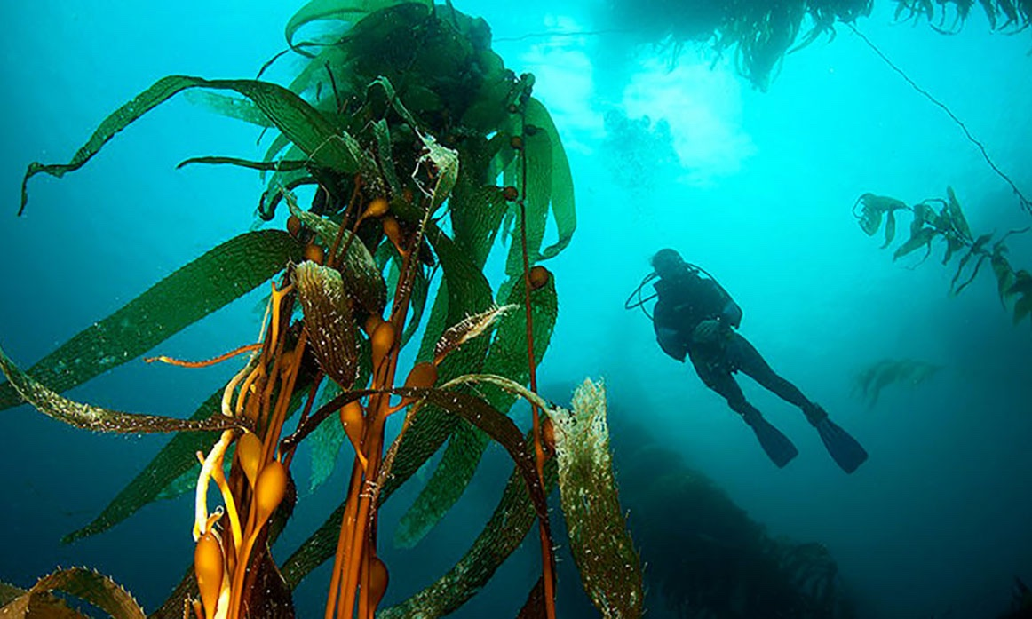 What Kelp Forests Can Do for the Climate https://t.co/zIQKKCMvKC @eaEnergyEU @iForestGlobal  @southpoleglobal @RoyalSocBio @Svebio @WorldResources @YESBANK @BarrySheerman @miljotweets #LeadershipMatters https://t.co/BkW3H92WdP