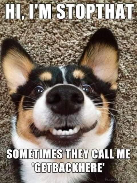 #animalmemes pic.twitter.com/BgkZ3Dun6e
